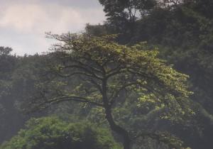 Angola_444-13
