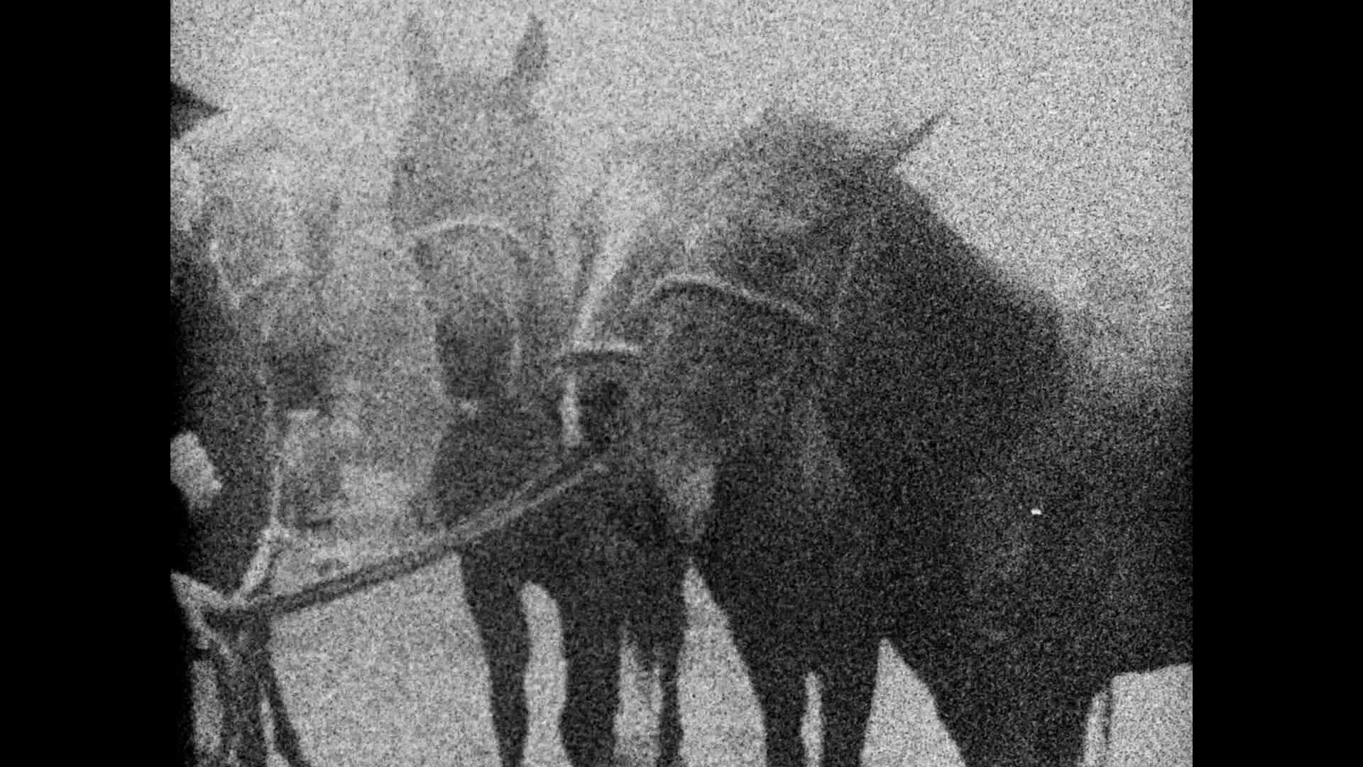 3 Dreams Of Horses Mike Hoolboom Doclisboa 2018